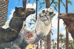 cSearightpPostcard37-Syrian-postcard-1976