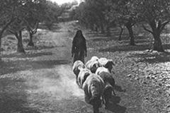 cSearightpPostcard3-On-the-Way-to-Bethlehem-postcard-1931