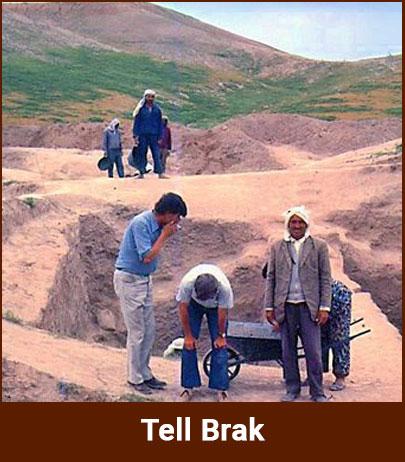 tell-brak